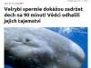 spermie_zadrzi_dech-tncz130615